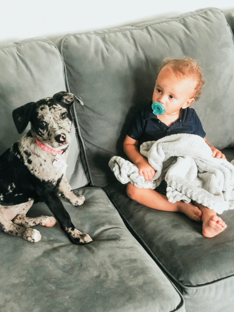 Toddler and Puppy Together on Couch